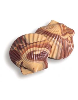 Asher Seashells Milk Chocolate and Peanut Butter 64ct