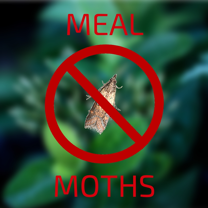 Meal Moths: The Uninvited Customers In Your Candy Store