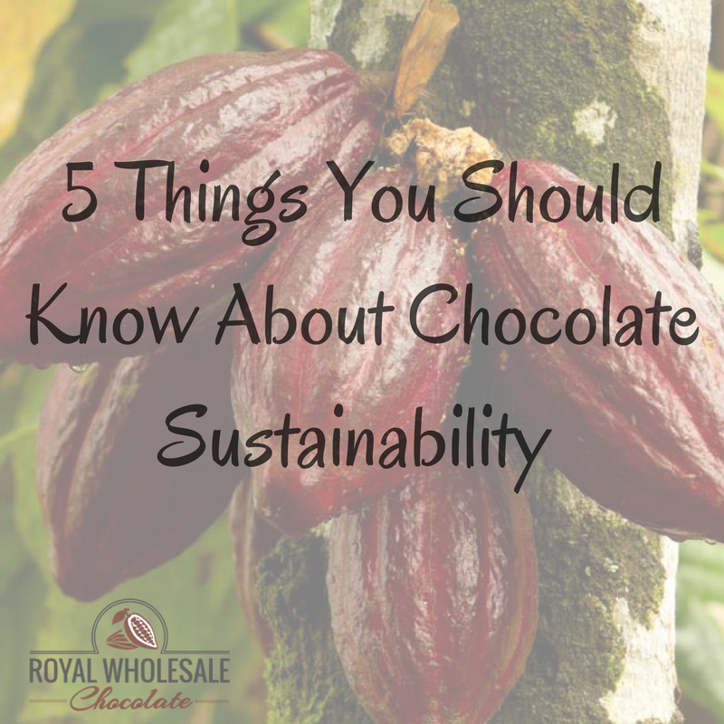 5 Things You Should Know About Chocolate Sustainability
